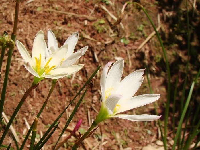 Lúc này và nơi đây, hoa cỏ cùng bầy sâu cái kiến vui, buồn hư thực...