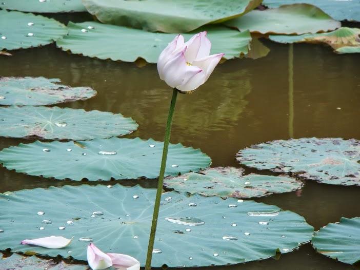 Những ý nghĩ nặng trịch như nổi khổ đau từ dòng sông Mịch La đổ tràn vào ngày Thất Tịch
