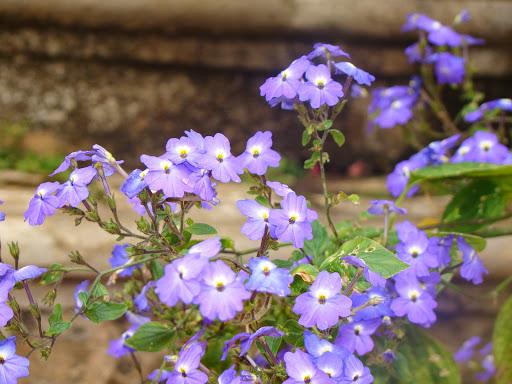 Phơn phớt với đời bao lần hẫng hụt, pha nhiệt tình hương sắc một lần không...