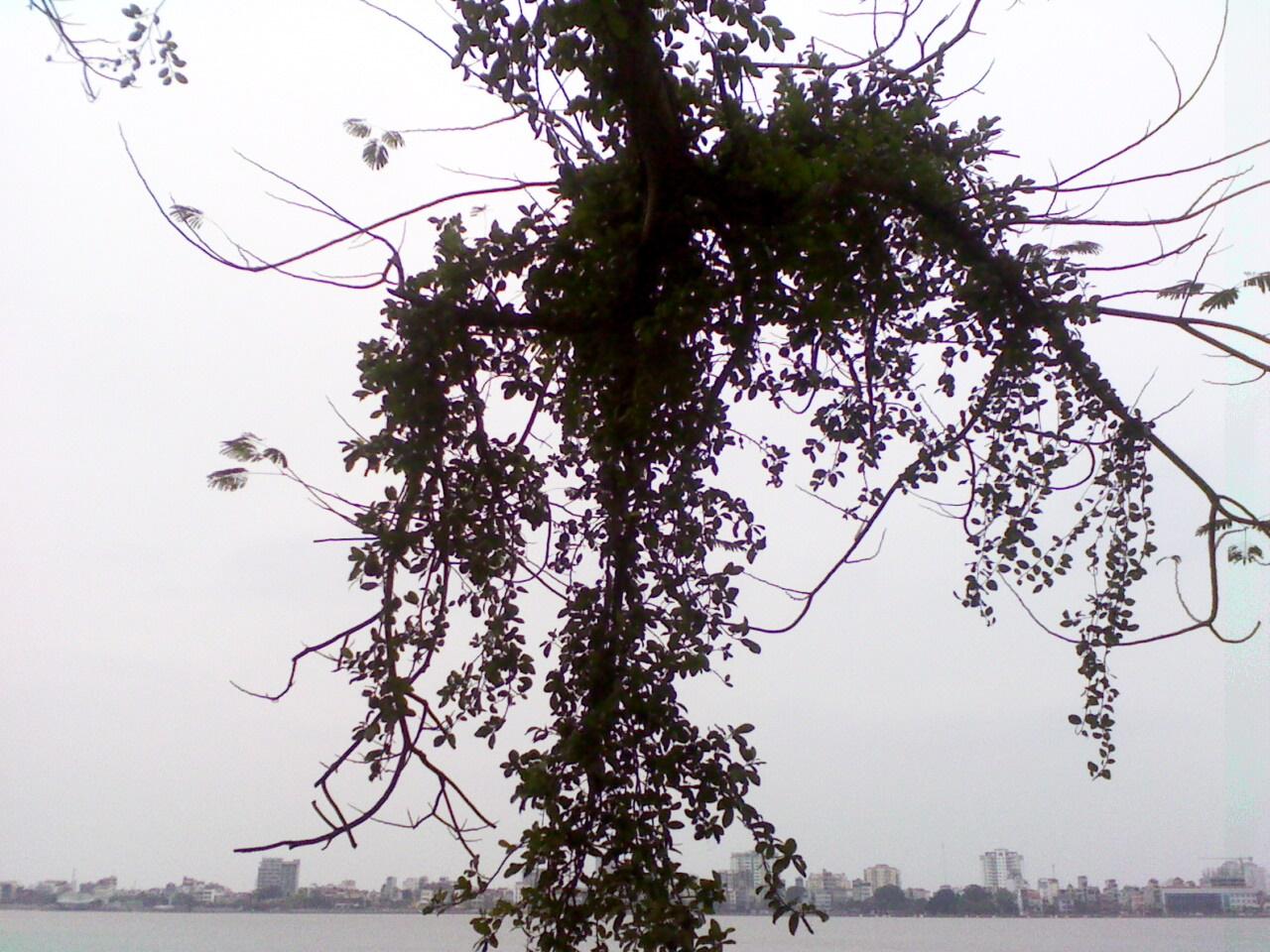 Hồ Tây, ngày mơ hồ lên tay...